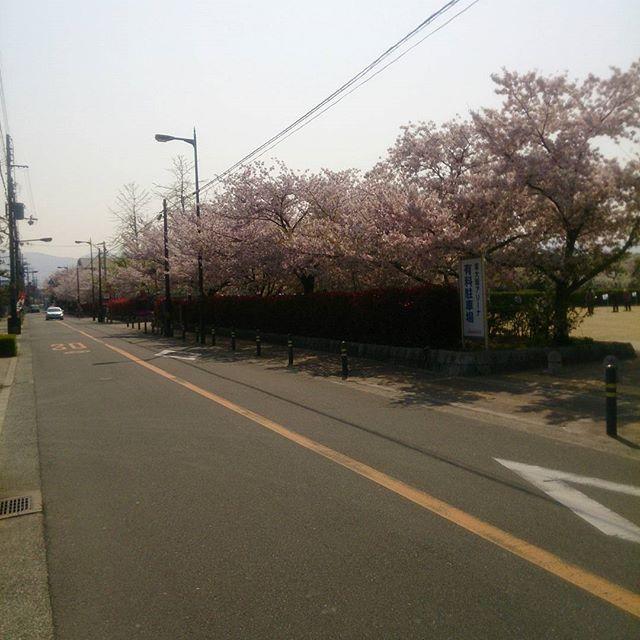 【Instagram】 #八戸ノ里公園 part2