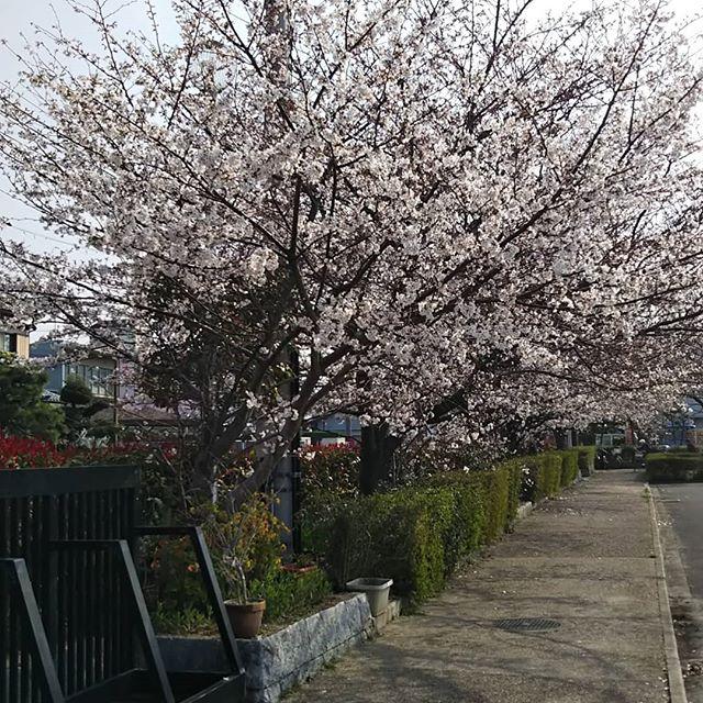 【Instagram】#八戸ノ里公園