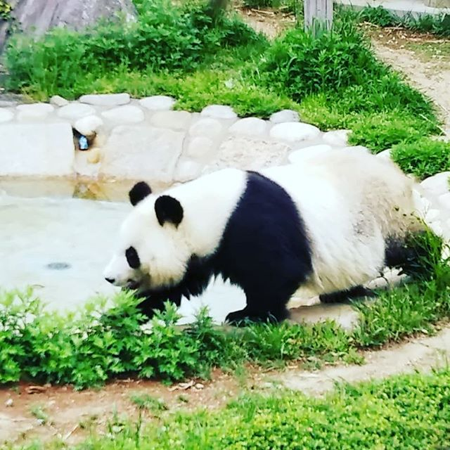 #王子動物園